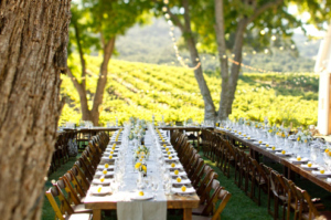 Los Angeles Wedding Venues - Vineyard