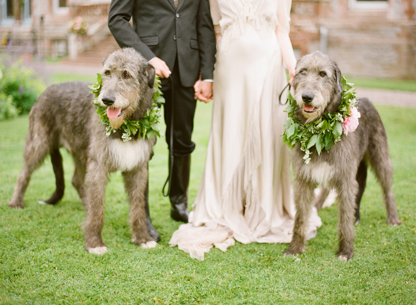 Dogs In Wedding